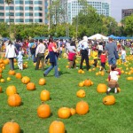 Pumpkins in the Park