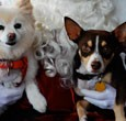Pet Events Giant Creative enjoys working on events specifically for pets (and their owners). These fun, pet-focused events feature a wide variety of vendors that sell items for pets, pet...