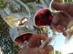 Alameda Wine Walk